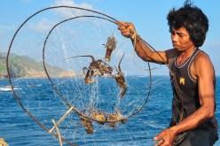 Pantai-Timang-lobster