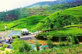 wisata kebun teh nglinggo