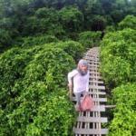 wisata hutan mangrove kulonprogo